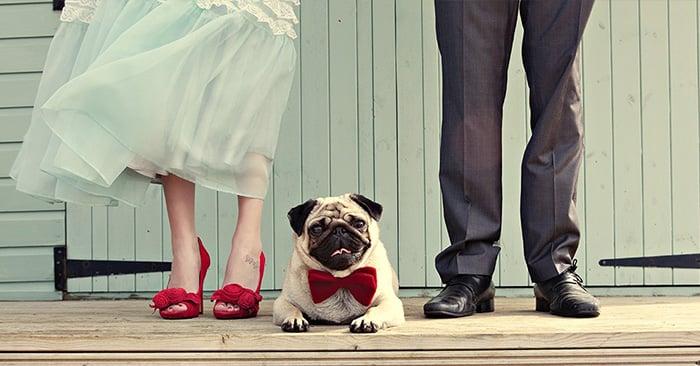compartir el día de tu boda con tu perro