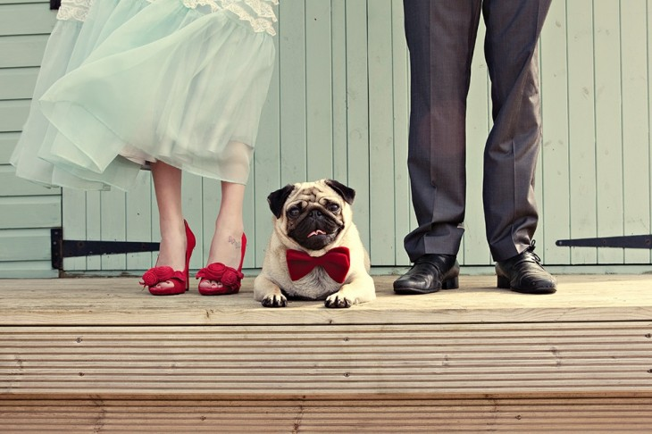 wedding photos with pug