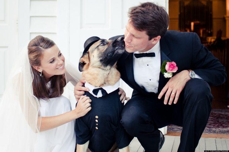 boda perro con traje