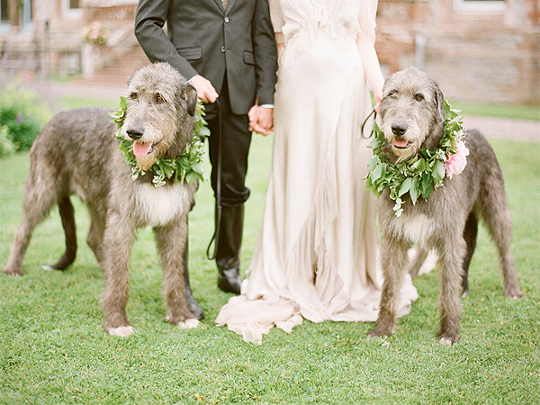 wedding with their dogs