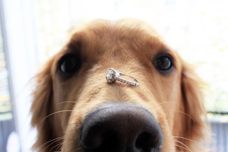 perro anillo de compromiso