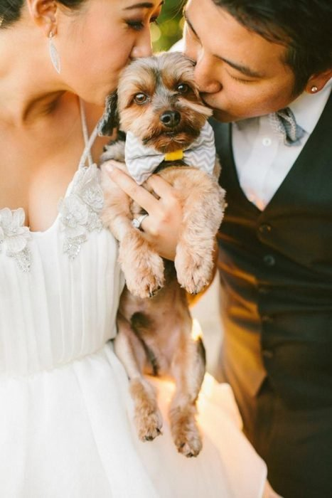dogs in wedding photographs