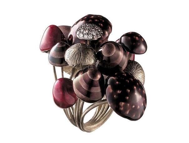 anillo de hongos morados de distintos tamaños
