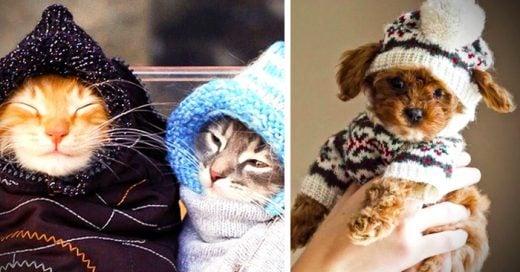 30 Tiernos animales que saben cómo lucir en época de frío