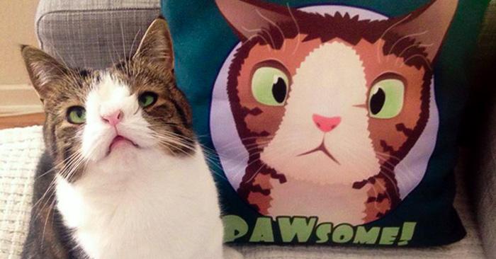 """Conoce a """"Monty"""": Un adorable gato con una cara poco usual"""
