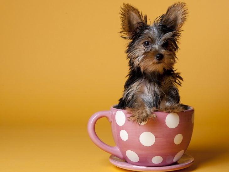 Yorkshire en una taza de café