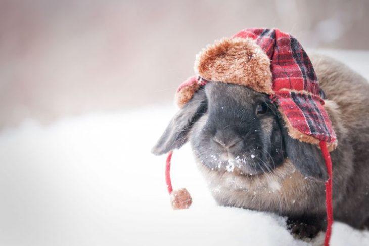 Conejo gris con gorro