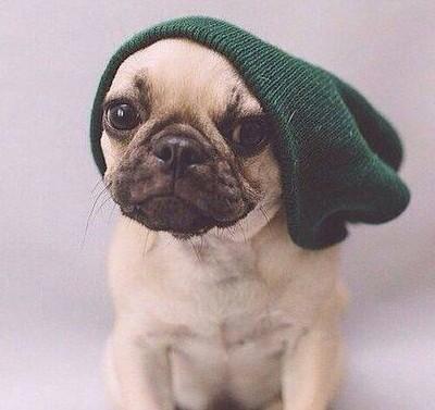 Perro pug con gorro verde