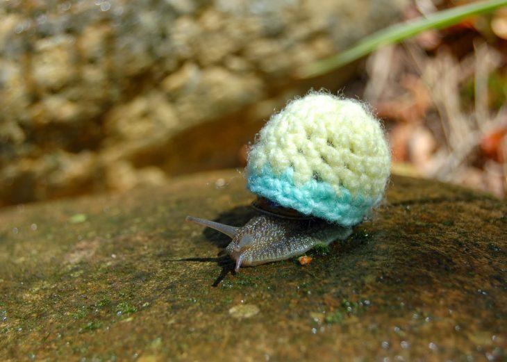 Caracol con suéter