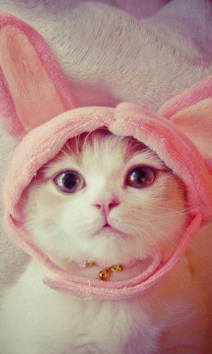 Gato blanco con gorro de conejo rosa