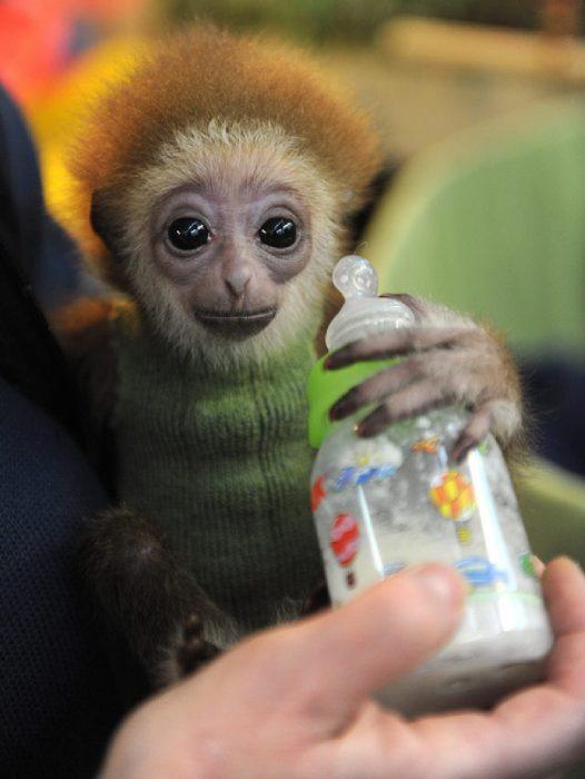 Mono con suéter verde y biberón