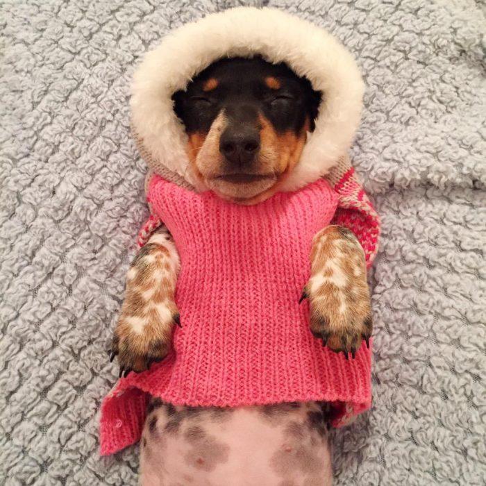 Perrito con suéter rosa y gorrito