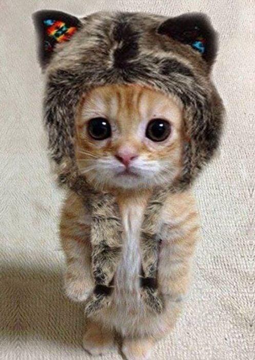 Gatito anaranjado con gorro