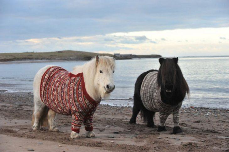 Ponys con suéter