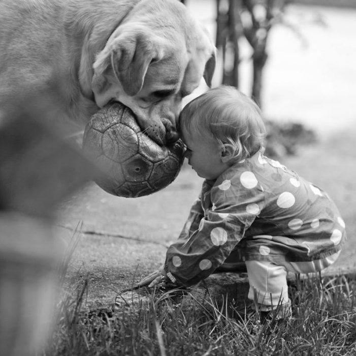 Un niño y su perro jugando con una pelota de futbol