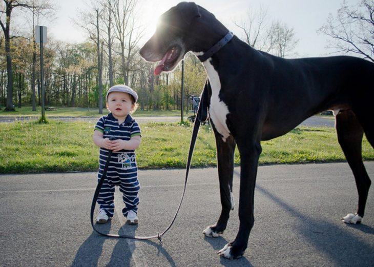 Un niño parado frente a su perro sosteniéndolo con una cuerda