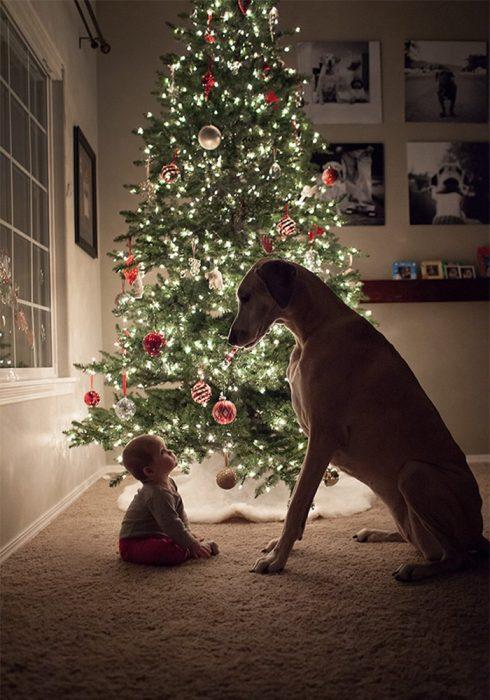 Un perro y un niño frente a un árbol de navidad sentados en el suelo
