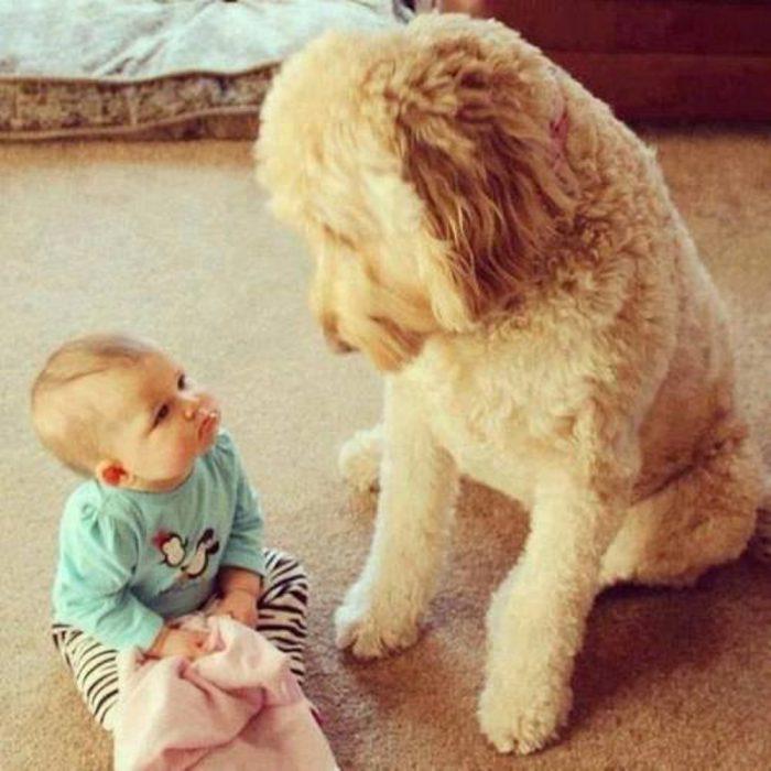 Un perro y un bebé sentados en el suelo viéndose el uno al otro