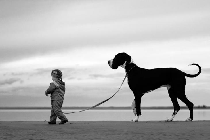 Niño caminando y tirando una cuerda a su perro grande