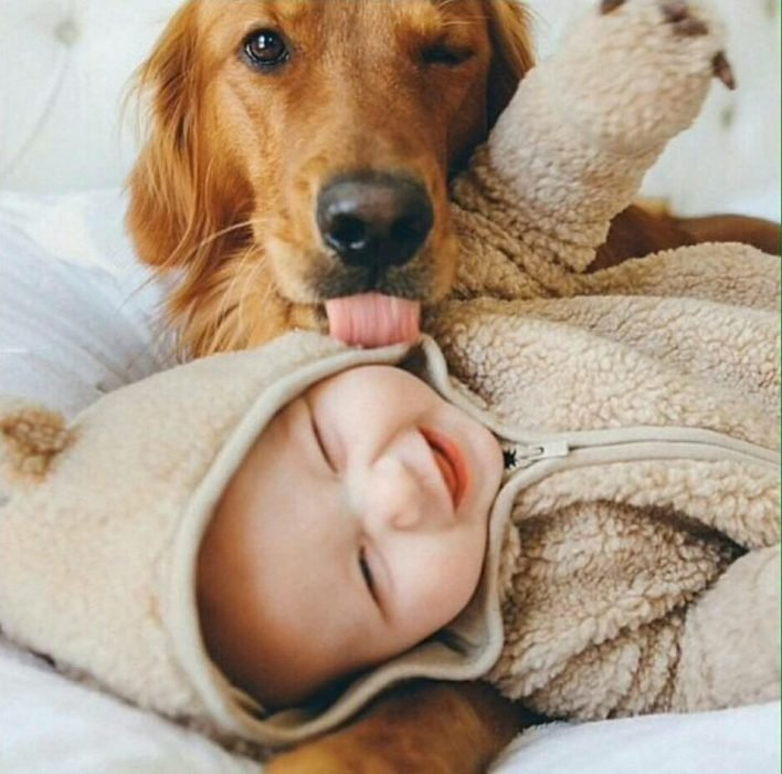 Un perro lamiendo el cachete de un bebé