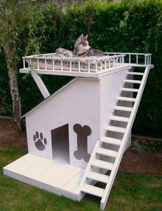 Casita de perro dos pisos y diseños en su puerta