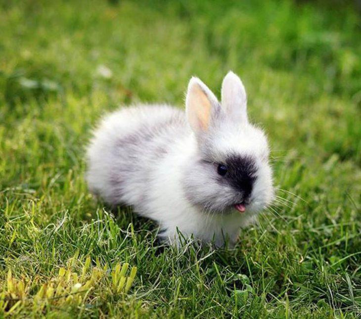 conejito bebé sacando la lengua