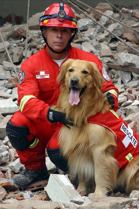Perro golden rescatista y su compañero bombero