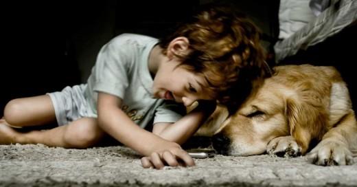 12 Cosas que tu perro puede saber antes de que ocurran ¡Impresionante!