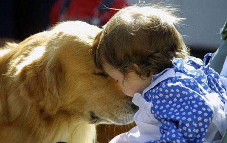 Perro golden con una niña pequeña