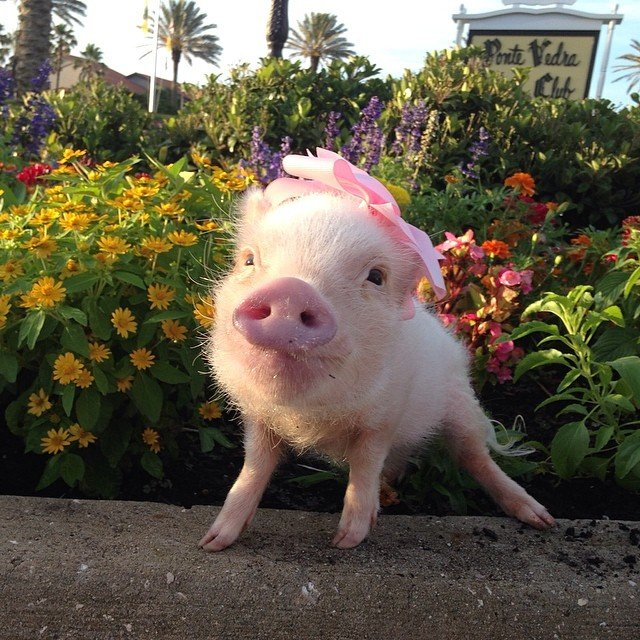 Mini pig rosa en un jardín con flores