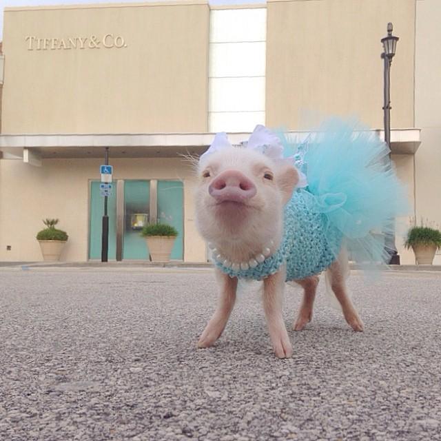 Mini pig rosa con vestido rosa afuera de una tienda
