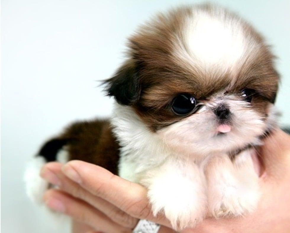 Resultado de imagen de perro pequeño