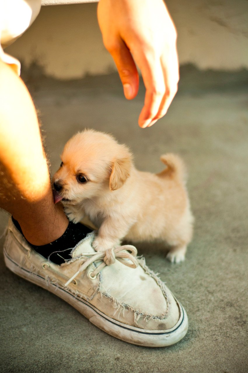 cute dog funny videos download