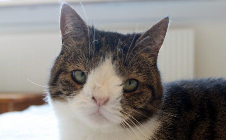 Monty gatito con la cara diferente