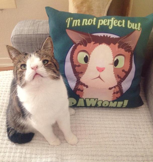 Gatito Monty junto a un cojín con su imagen