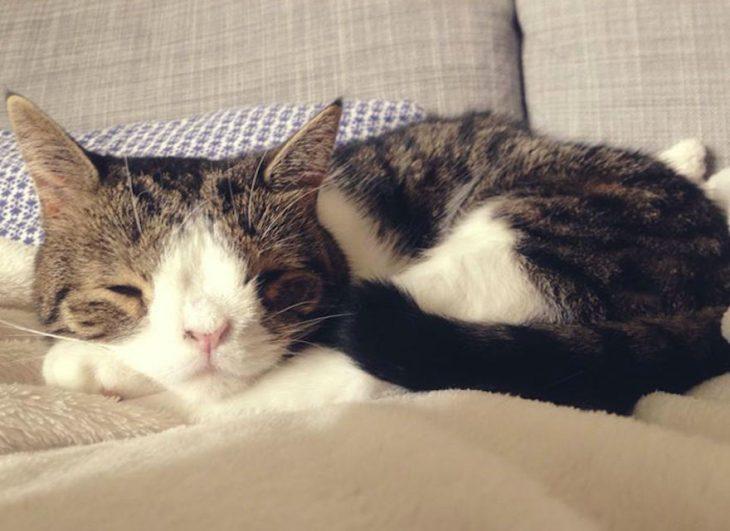 Monty durmiendo en una cama