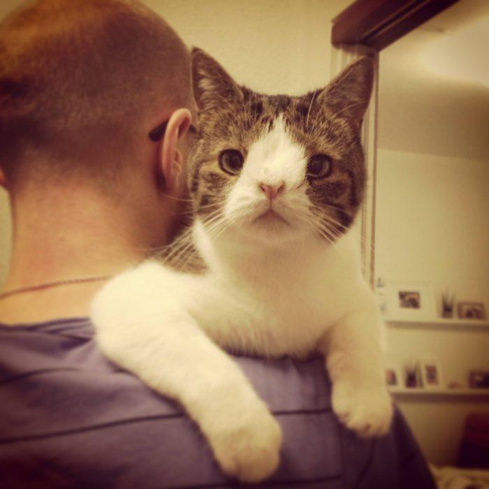 Gato monty sobre el hombro de su amo