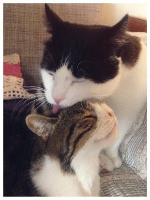 Monty bajo un gato que lo esta lamiendo