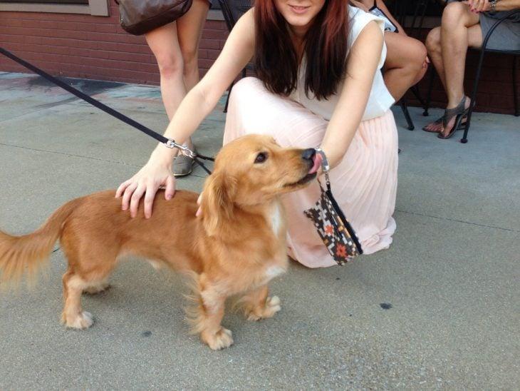 Perro con su dueña mezcla de Dachshund y Golden Retriever
