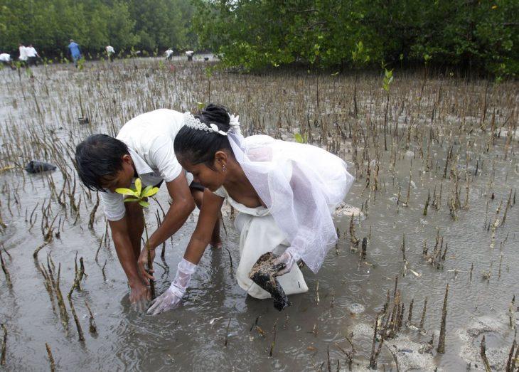 novios plantando un árbol en medio de un pantano