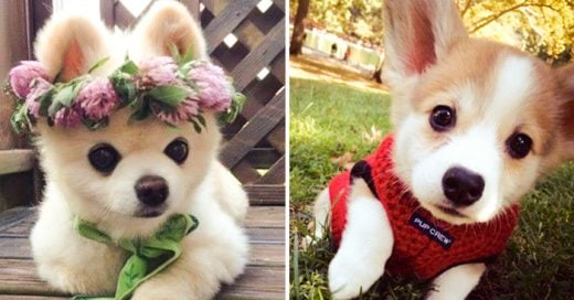 20 Adorables cachorros que te derretirán el corazón