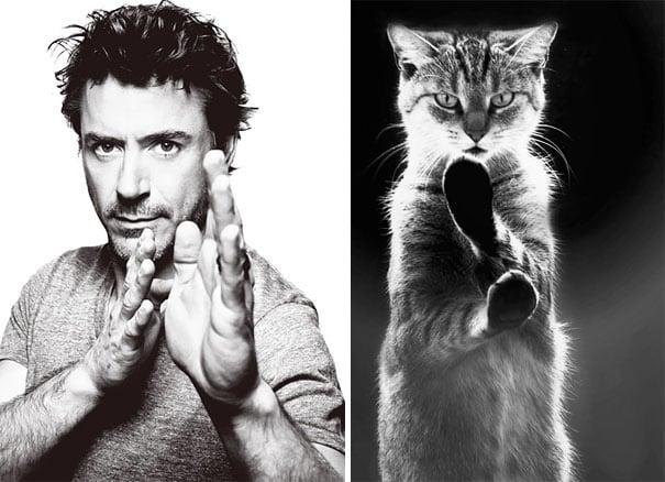 hombre y gato con la misma pose con las manos frente a su cara como ninjas