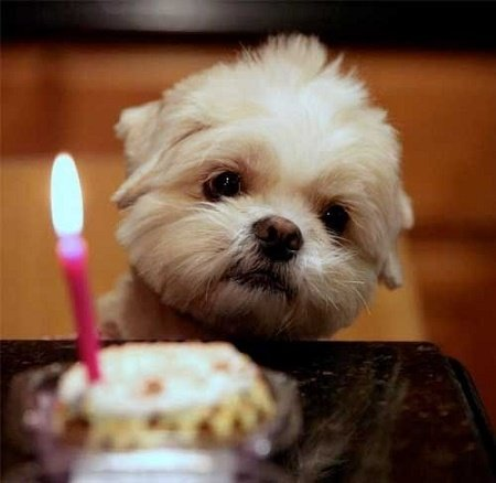 perrito frente a un pastel con vela de cumpleaños