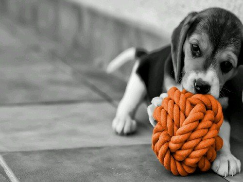 perrito jugando con una pelota color naranja