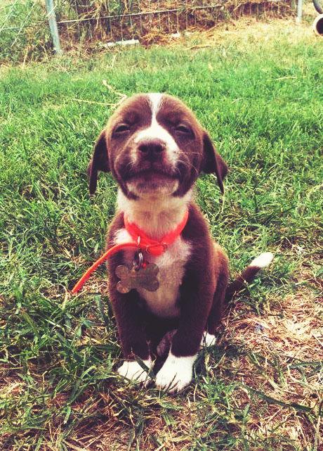 perrito sentado en el jardín sonriendo a la cámara