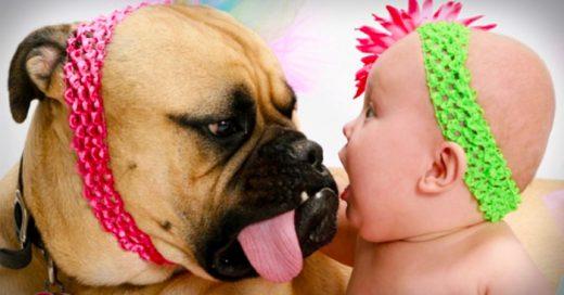 Hermosas fotos de pequeños bebés con sus perros gigantes