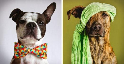 7 Razones para no cortarle la cola ni las orejas a tu perro