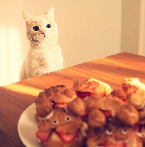 Gato Munchkin blanco viendo unos pequeños panecillos