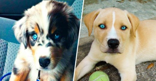 30 Adorables perros mestizos que desearas tener en tu casa ¡Son hermosos!