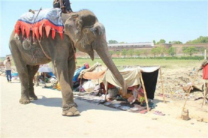 """Elefante """"Raju"""" dando un paseo por la calle"""